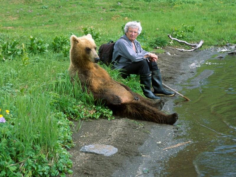 Нижегородские грибники все чаще стали встречаться в лесах с медведями