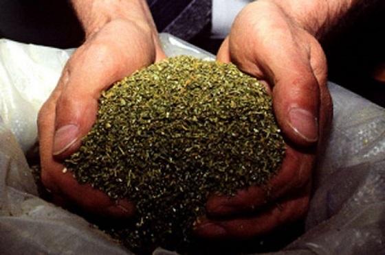 Челябинец отправился в колонию на 11 лет за 60 кг марихуаны