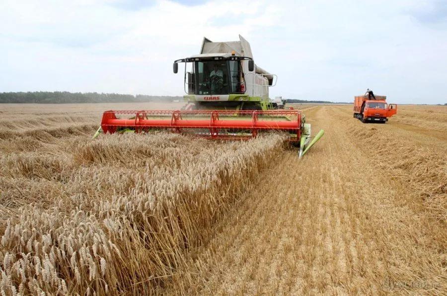 Саратовские аграрии приступили к уборке зерновых
