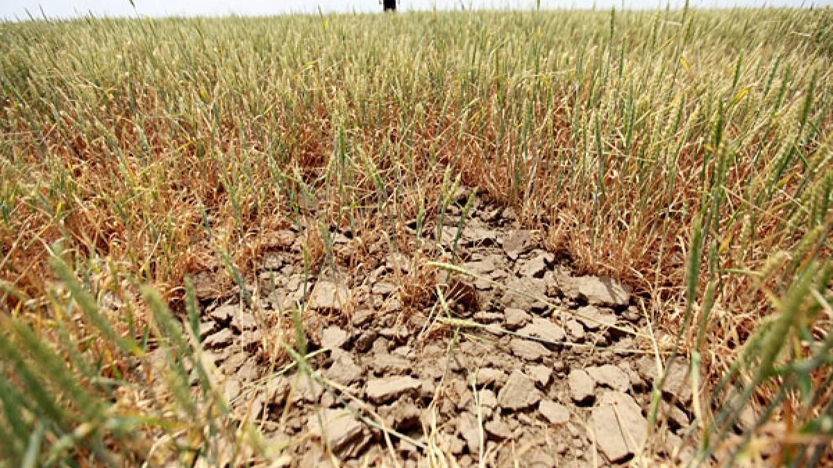 В Оренбуржье введен режим ЧС в связи с засухой и гибелью сельхозкультур