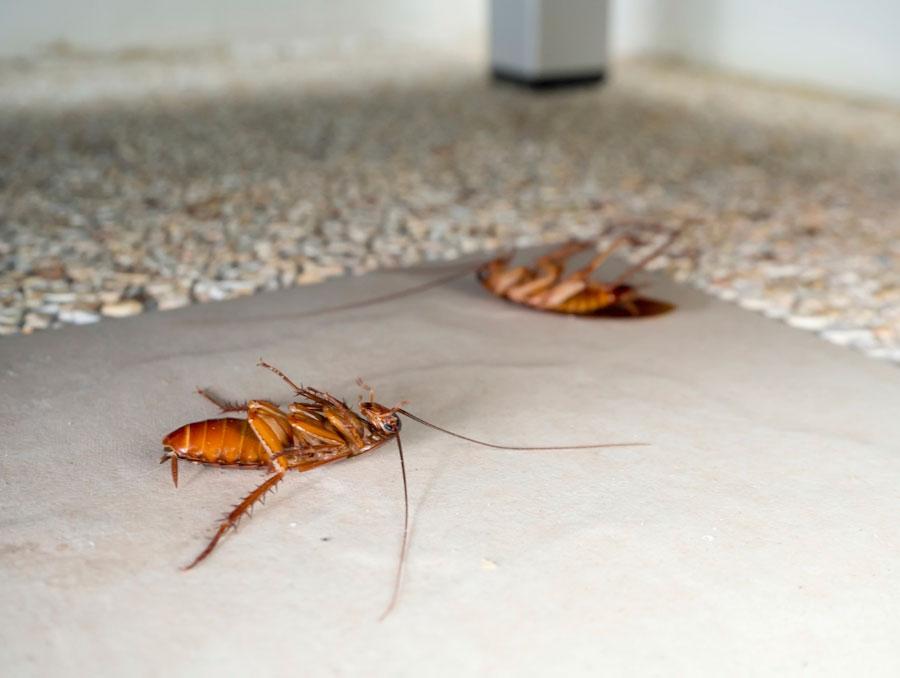 Роспотребнадзор обнаружил тараканов в столовой ижевской гимназии