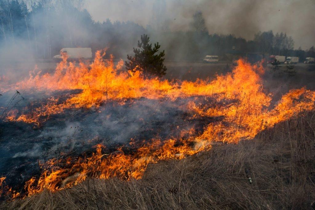 Режим ЧС введен в Нижнем Новгороде из-за роста числа природных пожаров