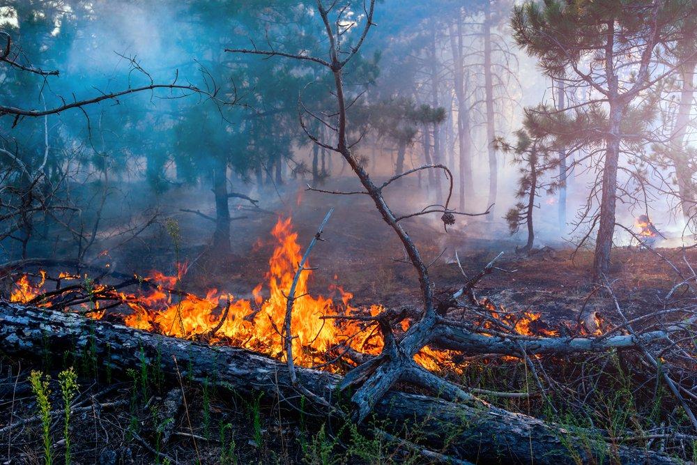 Первые лесные пожары отмечены на Урале
