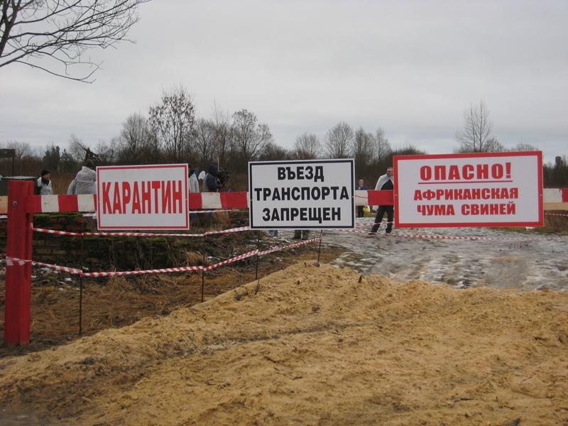 Режим ЧС введен в Кошкинском районе Самарской области из-за вспышек АЧС