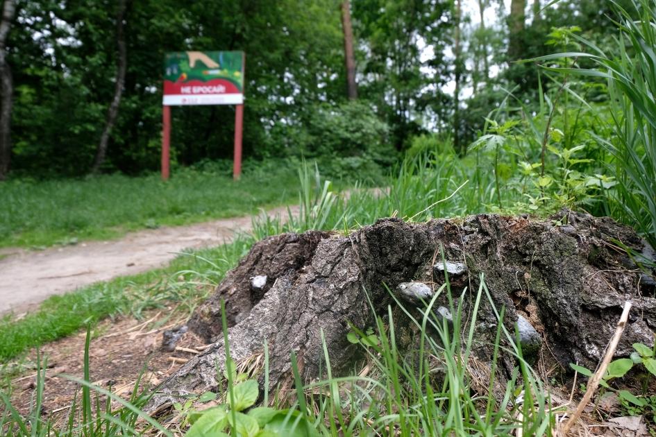Запрет на посещение лесов снят в Удмуртии